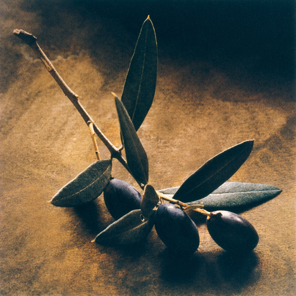 The Symbolism Of The Olive Tree In Christianity Grelia